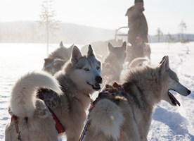 The Silence of Lapland activity package